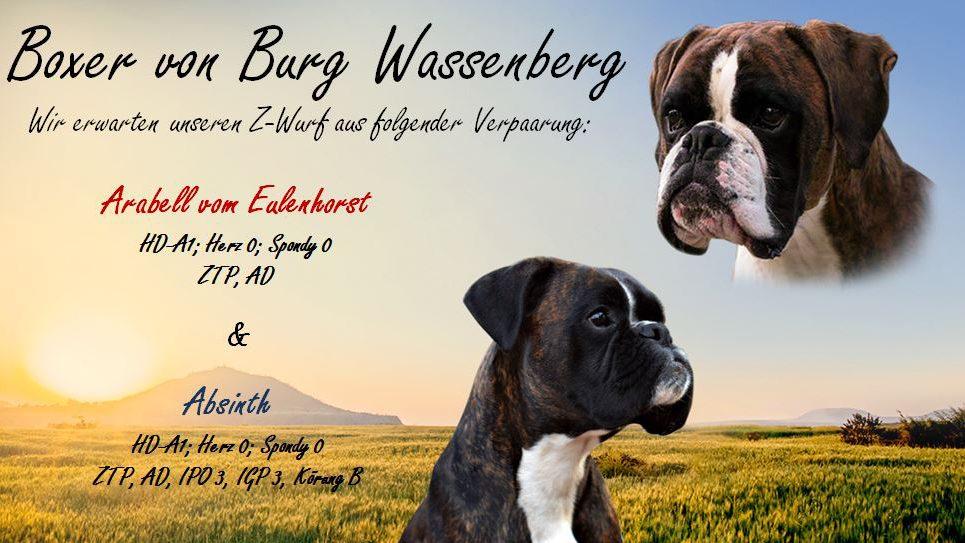 Boxerzwinger von Burg Wassenberg